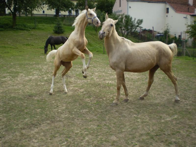 Equine Genetics Gen Cream